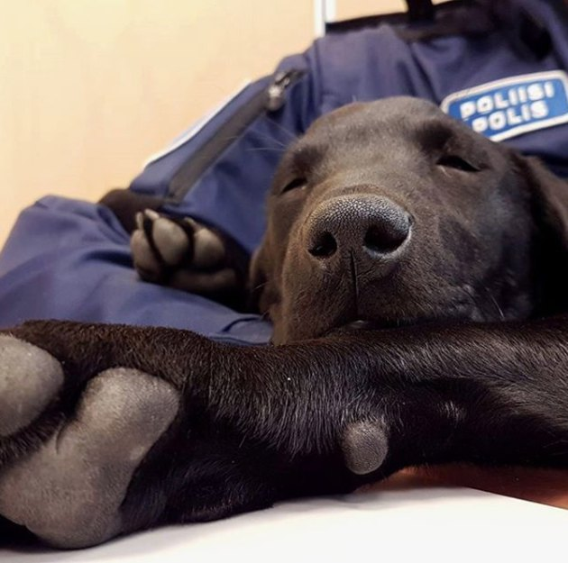 100+ names perfect for police dogs