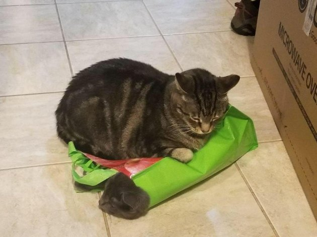 Cat sitting on cat in a bag