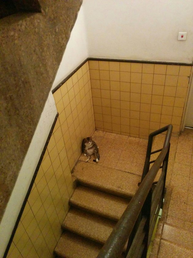 Cat sitting in a stairwell.