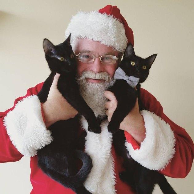 Santa holding two young black cats up to his face.