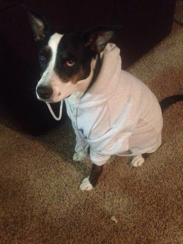 handsome hoodie