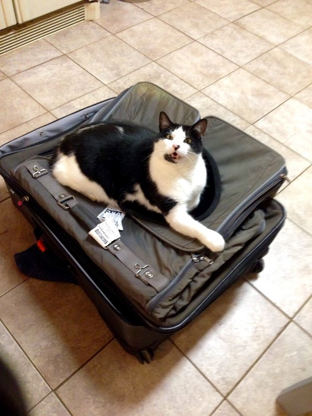 Cat laying on suitcase