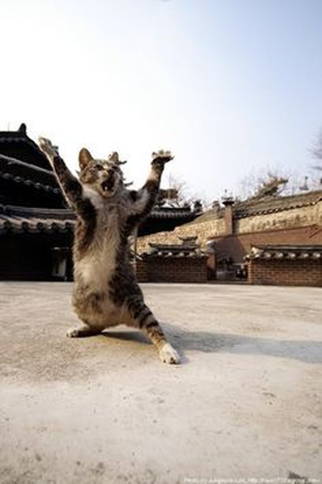 Fighting Cat