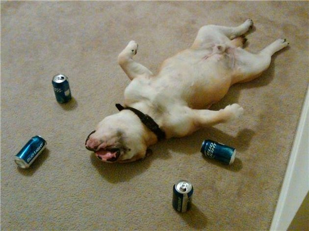 Dog sleeping on its back surrounded by beer cans.