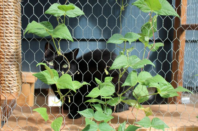 I Can Has Catio: 5 Things We Learned About The Hottest Cat Accessory Of 2017