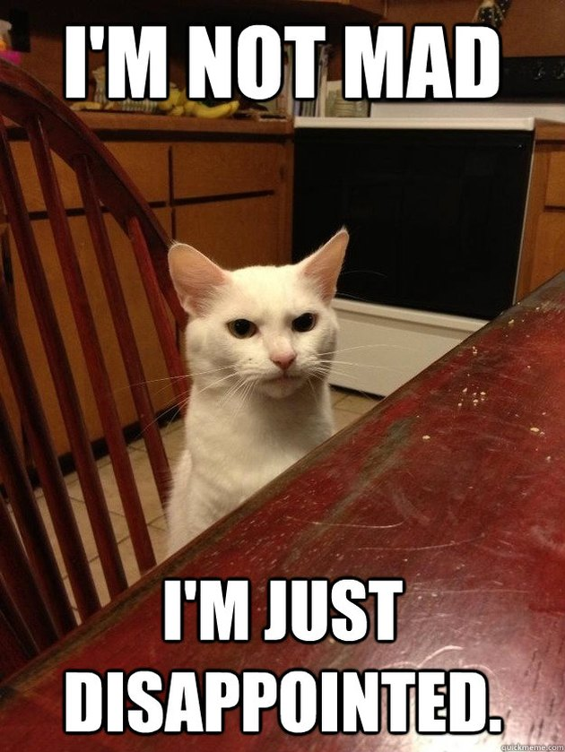"Stern-looking cat with caption: ""I'm not mad. I'm just disappointed."""