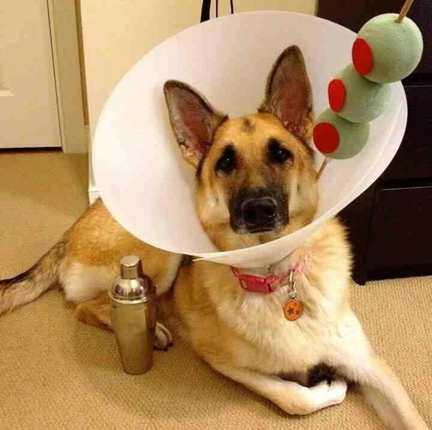 Dog with a cone dressed up like a martini