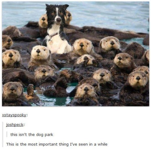 Animals Who Act Like Other Animals