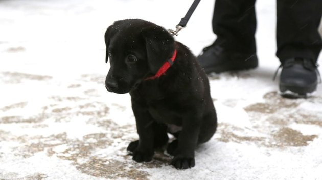 NHL team in Canadia needs help naming new explosive ordnance disposal puppy