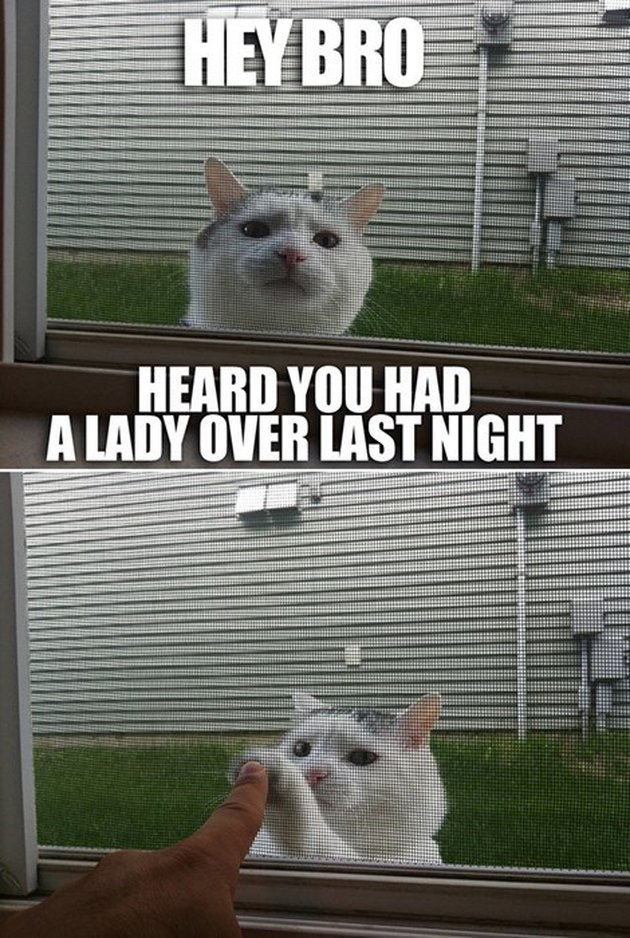"Cat giving a high five through a window with the caption: ""Hey bro, heard you had a lady over last night."""