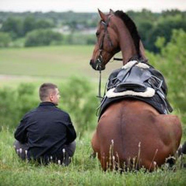 horse sitting