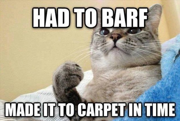 Success cat barfs on carpet