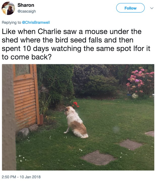 dog staring for mouse