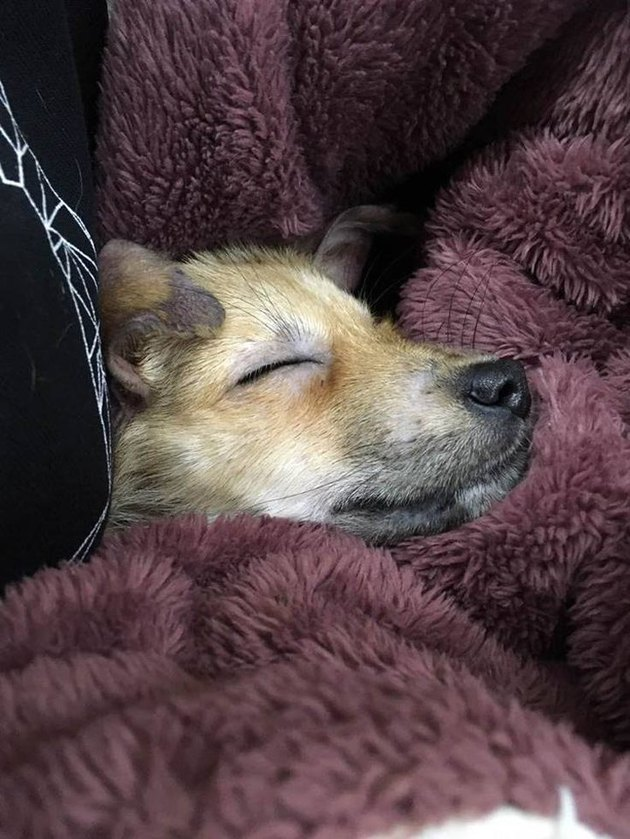 Puppy rescued from Chinese slaughterhouse