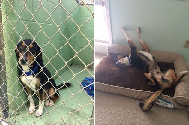 Dog before and after being adopted