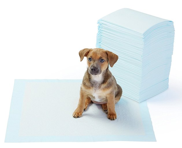 Puppy training pads.