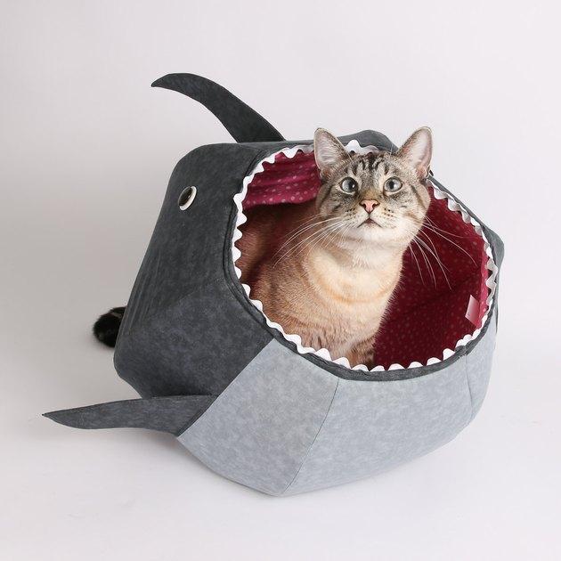 cat in shark bed