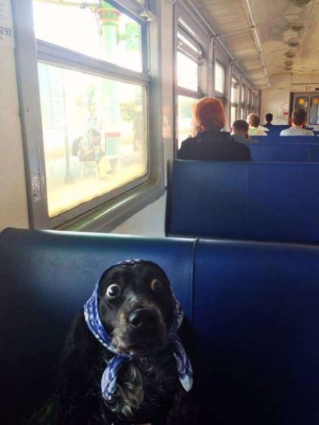 Nervous dog on train wakes up after missing stop