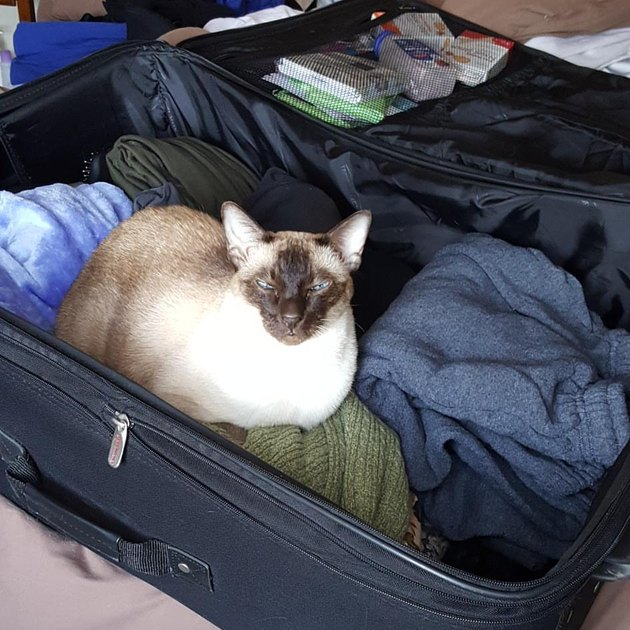 Packing Cat