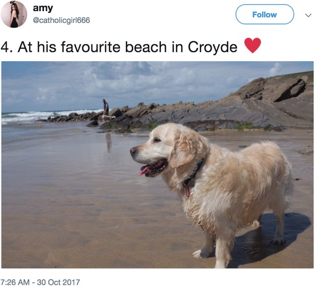 archie at beach