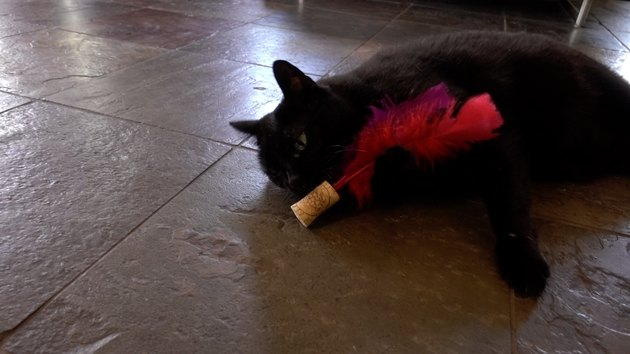 Cat playing with DIY cat toy out of a wine cork and feathers.