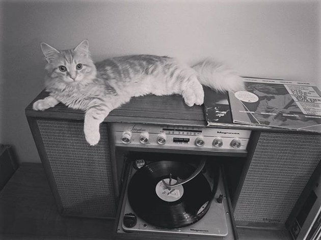 Black and white photo of cat on turntable
