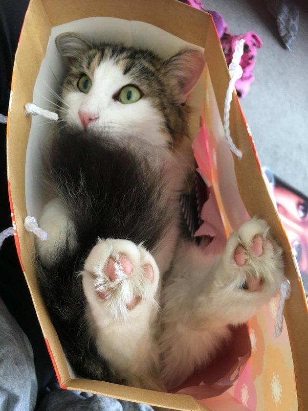 Cute cat in a bag