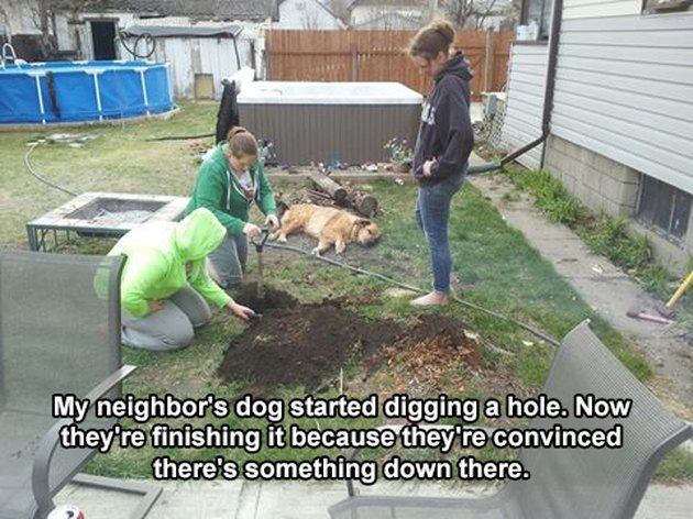 Dog lays next to people digging a hole.