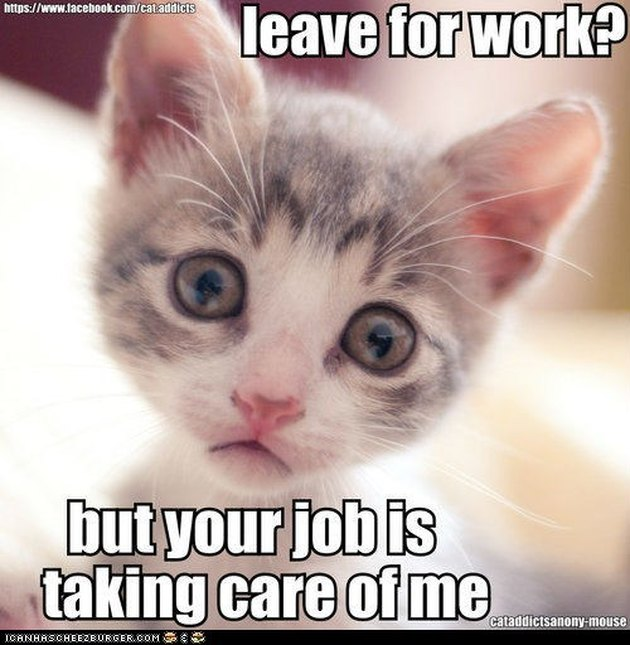 "Sad kitten ""Leave for work? But your job is taking care of me."""
