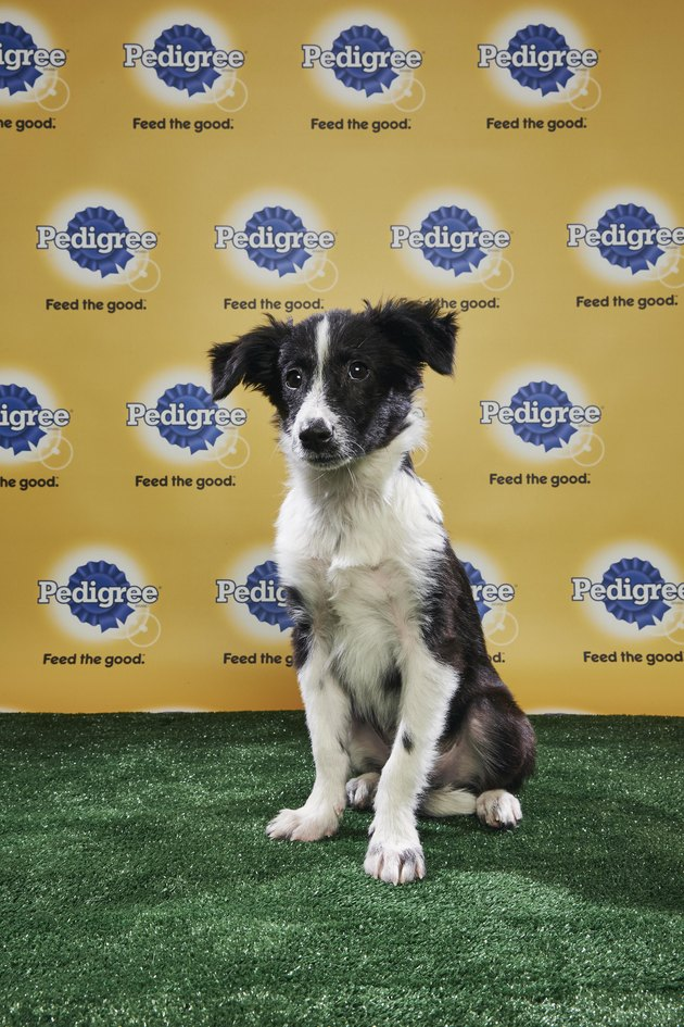 The lineups for Puppy Bowl 2018 have been revealed and OMG!