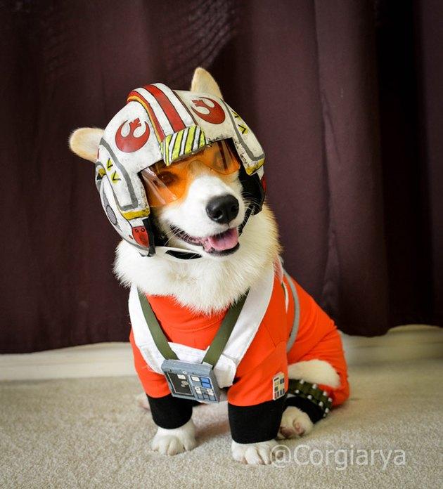 Star Wars Luke Skywalker Red 5 dog