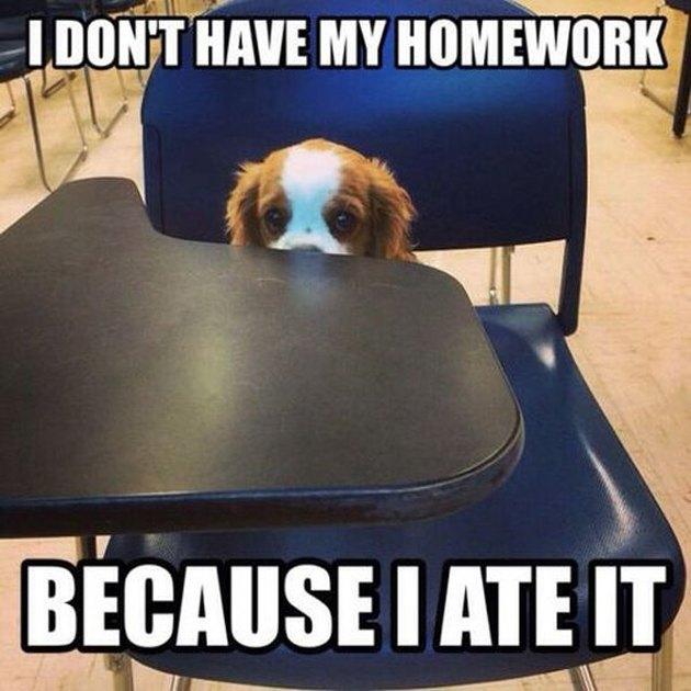 Puppy sitting at school desk.