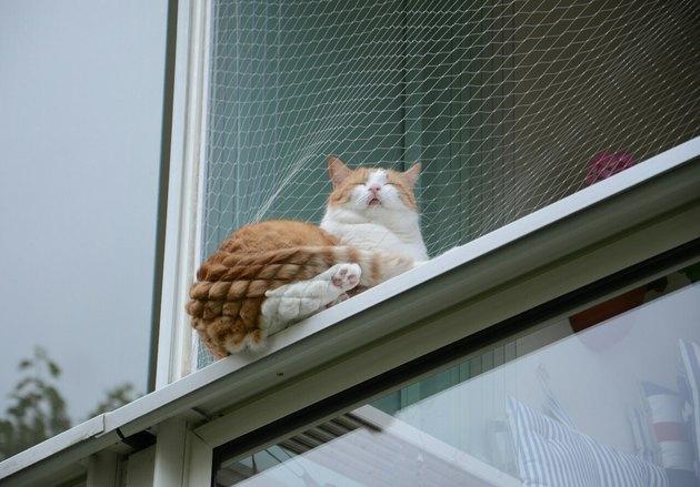 Cat sleeping in a net