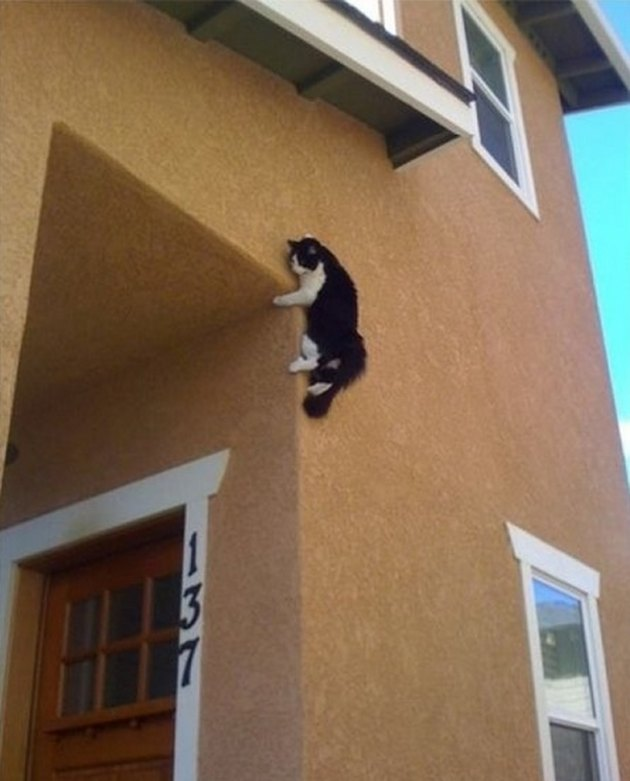 Cats Who Are On A Secret Mission Too Dangerous for You to Know About