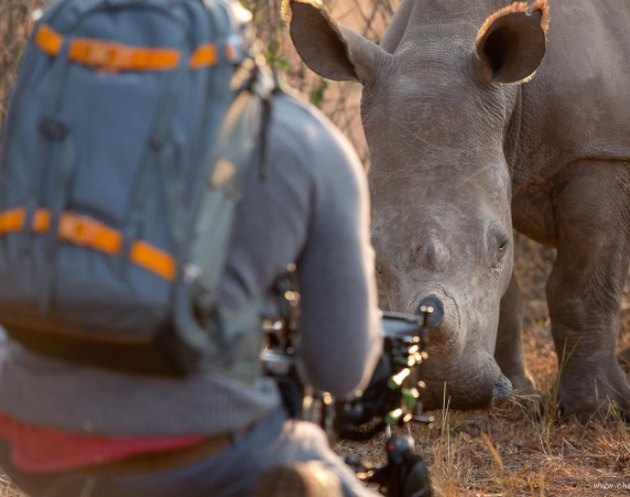 Photog Obliges Bossy Rhino That Demands Belly Rubs