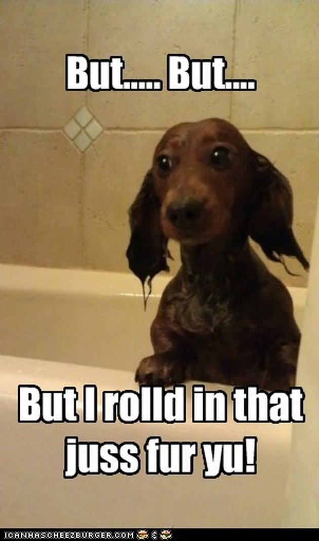 Dog in bath.