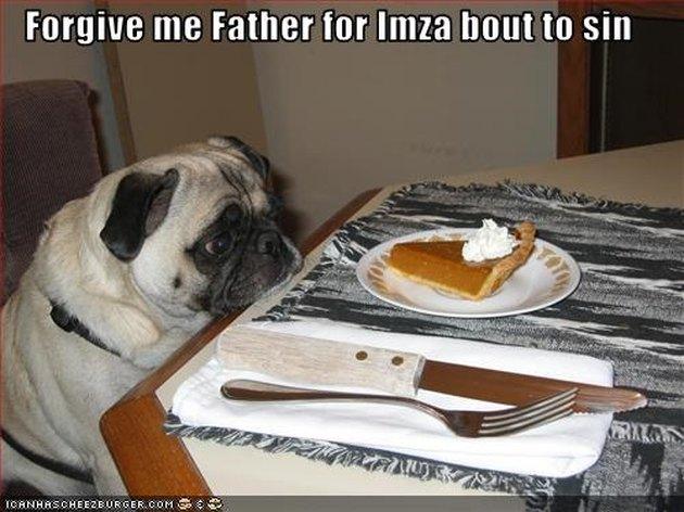 Pug contemplates slice of pumpkin pie.