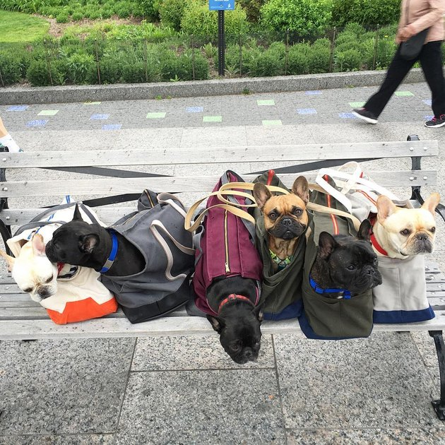 Row of dogs in bags on park bench