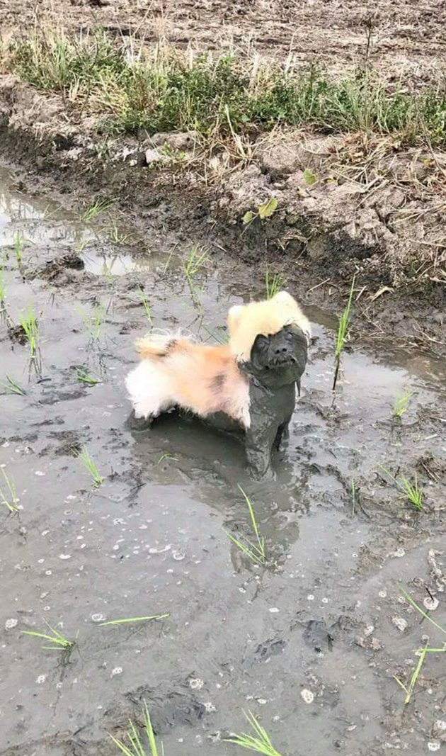 Dog with mud on its face.
