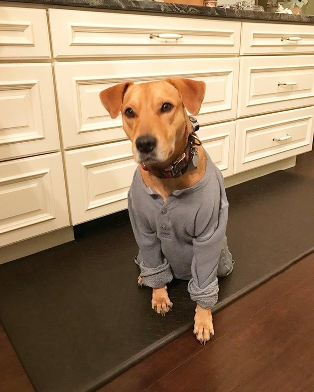 Dog wears shrunken wool henley
