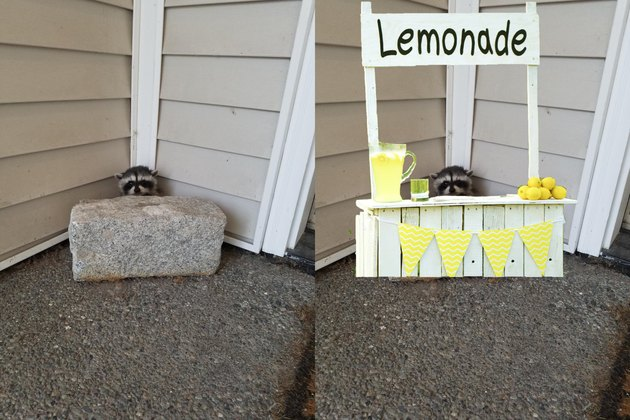 15 animals Photoshopped into ridiculous situations