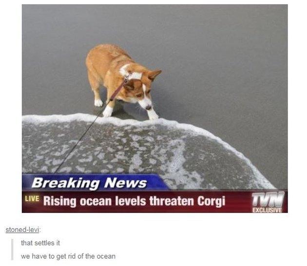 Corgi on beach pulling away from water. Caption: Breaking News, Rising ocean levels threaten Corgi