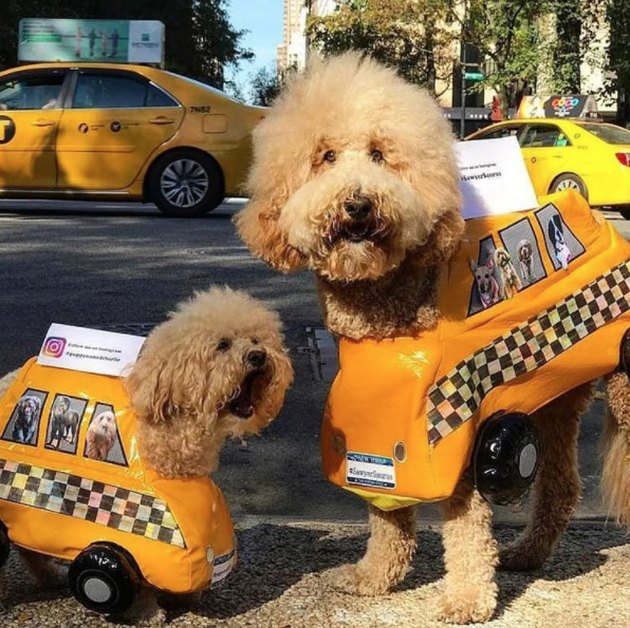 All the best costumes from the 2017 Tompkins Square Halloween Dog Parade