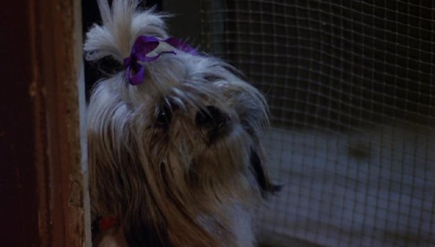 the most iconic dogs and cats from the movies