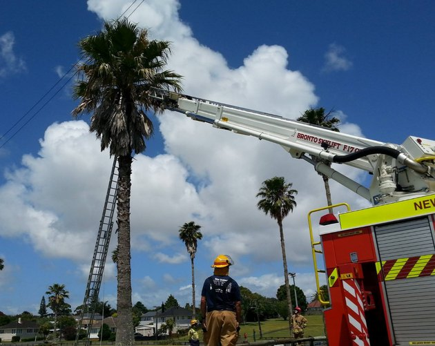 Two ladders to a palm tree