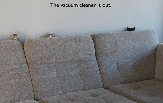 Cats hiding behind couch. Caption: the vacuum cleaner is out.
