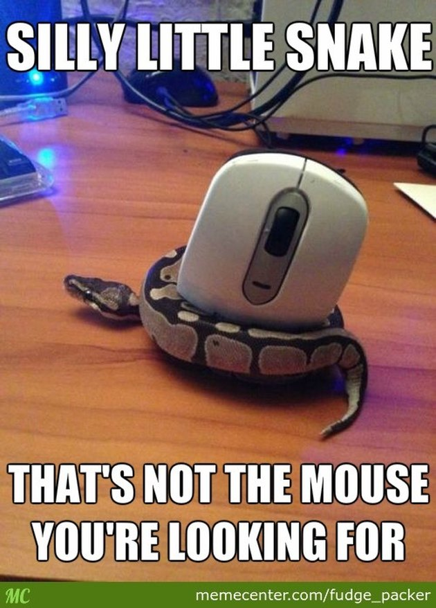 Snake wrapped around a computer mouse.