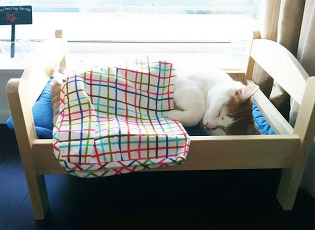 Ikea donates doll beds to Canadian cat shelter