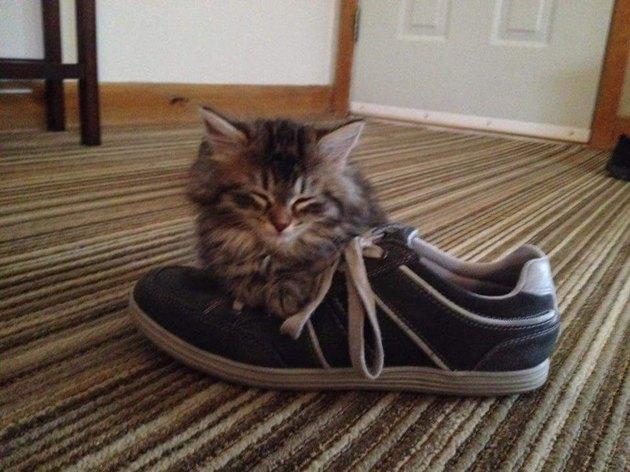 Kitten asleep on a tennis shoe