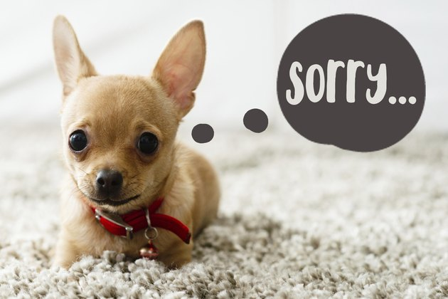 "Love means never having to say ""I'm sorry for peeing """